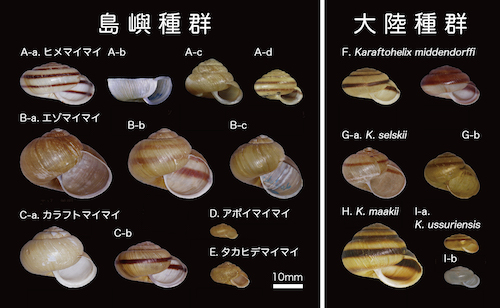 Figure1_Shells_Chap6