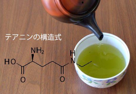 お茶の旨み成分テアニンの濃度を測るバイオセンサーを作りたい! – iGEMに神戸大学から初参戦