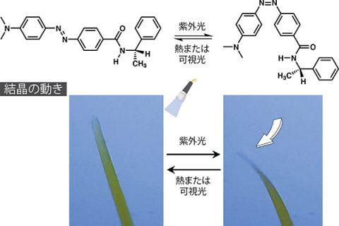 光を当てるとねじれ曲がる結晶 − 分子の反応を材料の動きへ