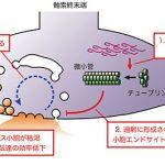 パーキンソン病の病因に迫る − αシヌクレインの神経伝達に対する毒性とそのメカニズム