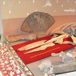 大阪の地下に眠っていたクジラを博物館で年月を超えて研究する