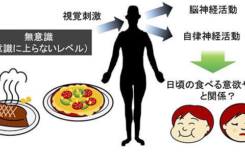 食べる意欲や我慢は、無意識に働く脳活動と関係するか – 脳磁図実験で探る!