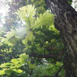 森の未来は菌だけが知っている – 森はどのように成り立ち、遷移していくのか