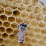 ミツバチがつくる「ハニカム構造」の謎 – ミツロウの自己組織化をシミュレーションで検証する