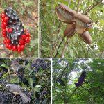 鳥の種まき追跡! – 3年間の大規模調査で探る、森の果実の量と種のゆくえ