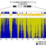 細胞1個でDNA複製を全ゲノム解析できる時代が来た! – DNA複製からゲノム制御の仕組みを探る