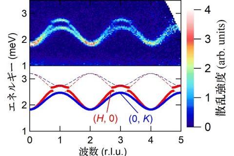 磁気準粒子はトポロジカルな性質を持つか? – 反強磁性体中のトリプロンの観測から探る