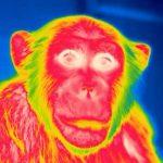 チンパンジーの心のはたらき – 他者の怪我への情動的反応を探る