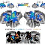 """脳は複雑な動作をどのように表現するか? – """"階層的運動情報表現""""の可視化に挑む"""