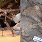 北極圏を横断した恐竜 – アラスカの化石を再検証してわかった、ハドロサウルス大繁栄の秘訣