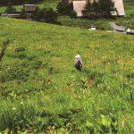 お花畑の保全は植物多様性の保全につながるのか?  – 文化的な生態系サービスの指標化に挑む