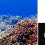 温暖化により熱帯の生物多様性は劣化している? – 海における生物多様性の変化の歴史と100年後の未来