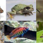 異なる種同士をかけ合わせた「雑種」が持つ特徴に共通点はあるか? – 動物分類群を横断したメタ解析で明らかになったこと